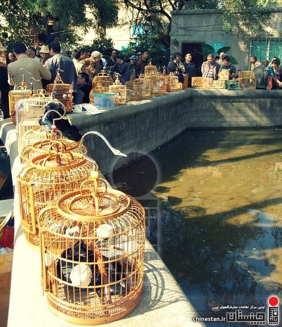 kunming-animal-market