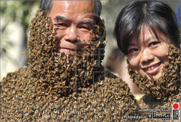 china-bee-bearding1